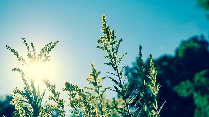 8 feiten over zonne-energie in 2021